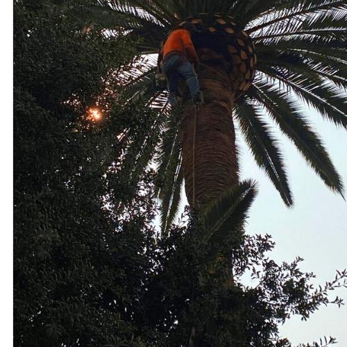 tree-trimming-near-me